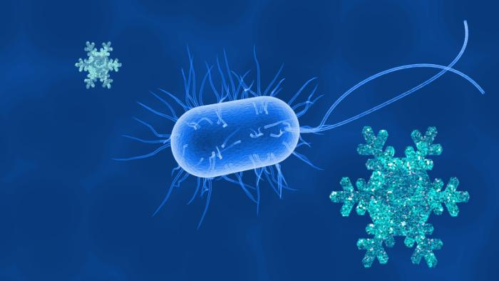 bacterie-eaux-froides-1h2o3