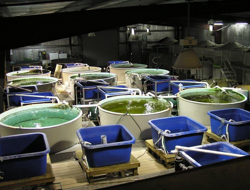 filtre biofiltre aquaponie aquaculture filter aquaponics broodstock poissons reproducteurs 1h2o3