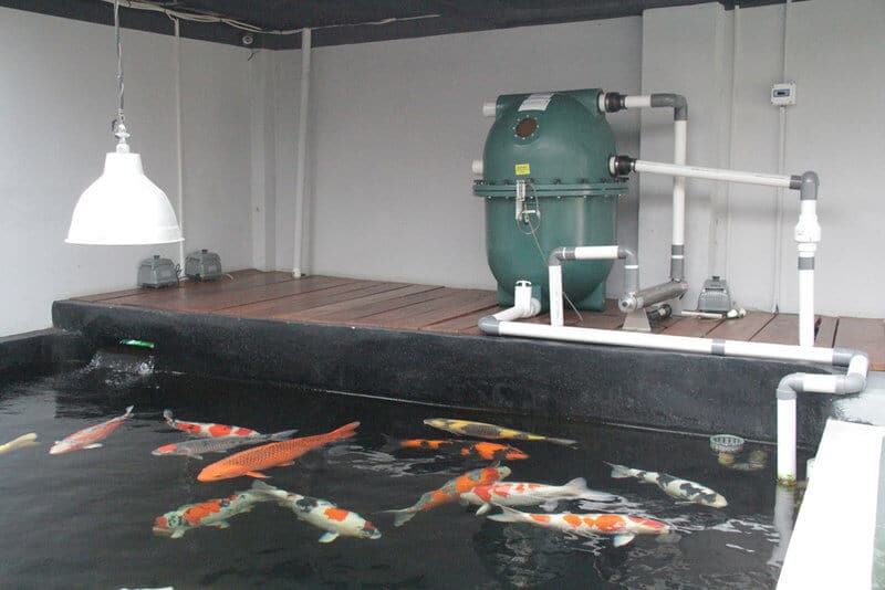 filtre biofiltre aquaponie aquaculture filter aquaponics private koi facility carpes koi 1h2o3