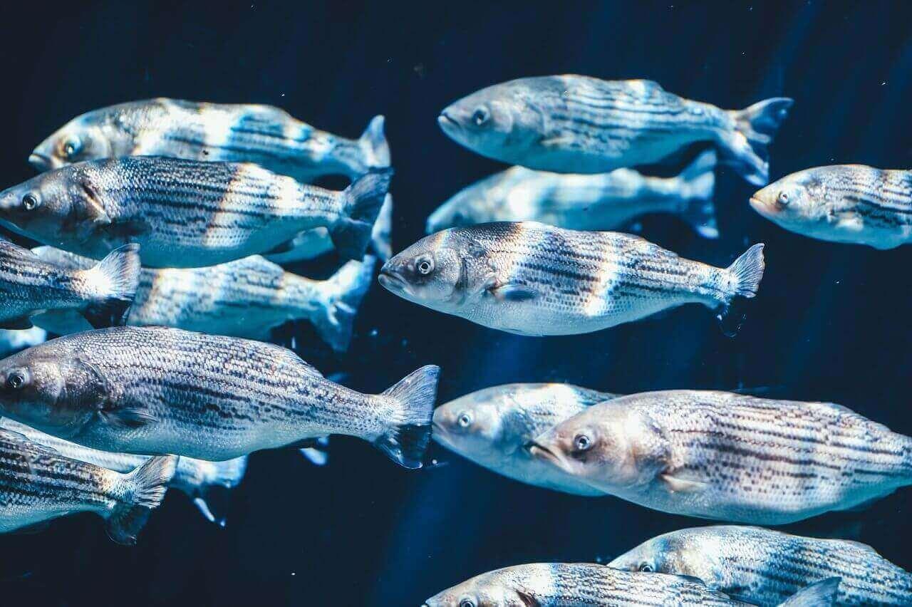 poissons systemes aquatiques 1h2o3