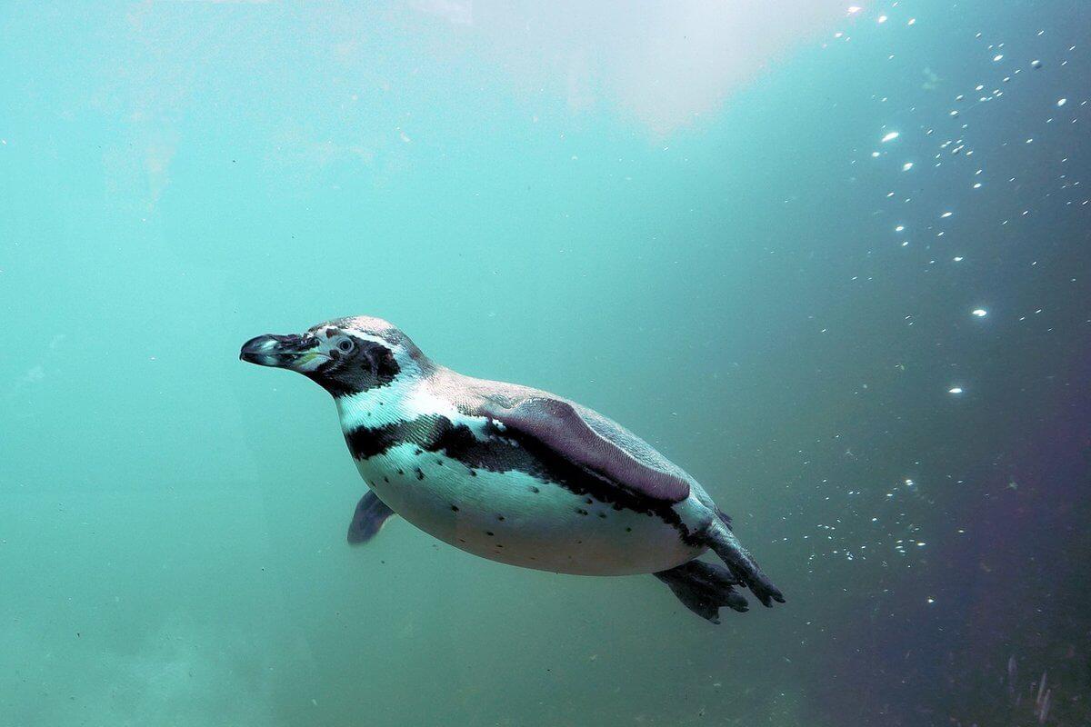 Commercial Aquarium Filters and Zoo Pond Filters Filtres d'aquarium professionnels et filtres pour zoo pingouin 1h2o3