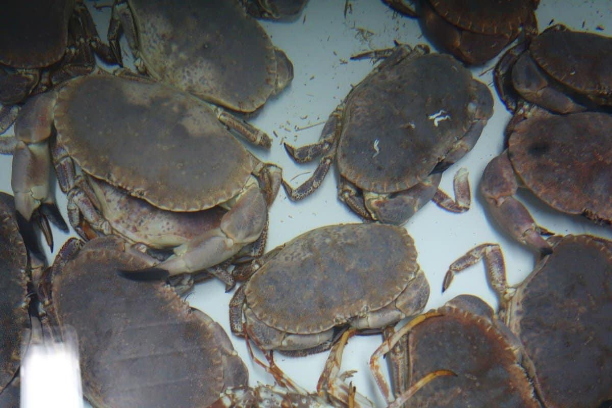 Applications aquatiques Systèmes de filtration pour les viviers à crustacés shellfish holding tanks 1h2o3